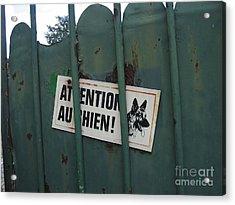 Paris - Farm Dog Acrylic Print