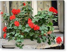 Paris Window Flower Box Geraniums - Paris Red Geraniums Window Flower Box Acrylic Print by Kathy Fornal
