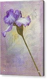 Parisian Purple Acrylic Print by Chanin Green