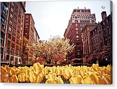 Park Avenue In The Spring  Acrylic Print by Vivienne Gucwa
