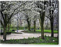 Park Blossoms Acrylic Print