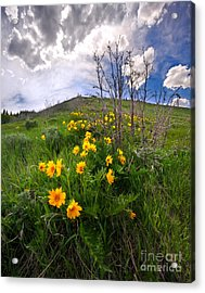 Park City Slopes In Spring Acrylic Print by Matt Tilghman