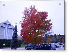 Parked Under Red Tree Acrylic Print by Dick Willis