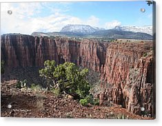 Parker Canyon In The Sierra Ancha Arizona Acrylic Print by Tom Janca