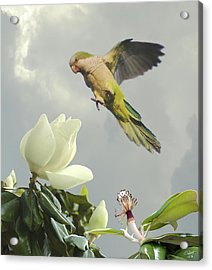 Parrot And Magnolia Tree Acrylic Print