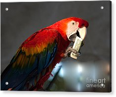 Acrylic Print featuring the photograph Parrot Eating 1 Dollar Bank Note by Gunter Nezhoda