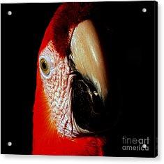 Acrylic Print featuring the photograph Parrot by Gunter Nezhoda
