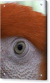 Parrot In Greenhouse No.1 2013 Acrylic Print by Joseph Duba