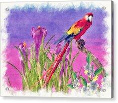 Parrot Acrylic Print by Liane Wright