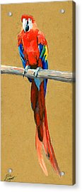Parrot Perch Acrylic Print