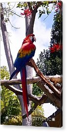 Acrylic Print featuring the photograph Parrot by Susan Garren