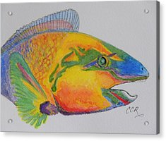 Parrotfish Acrylic Print by Connie Campbell Rosenthal