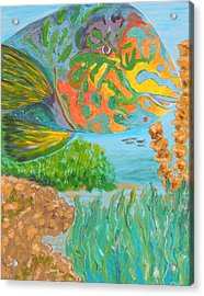 Parrotfish In The Coral Acrylic Print by Connie Campbell Rosenthal