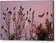 Acrylic Print featuring the photograph Parrots At Roost by Avian Resources