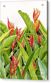 Parrot's Flower Heliconia Acrylic Print by Sharon Freeman