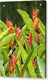Parrots Flower With Dark Background Acrylic Print