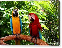 Parrot's Perch Acrylic Print
