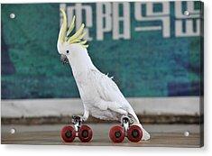 Parrots Performance To Celebrate May May Holiday Acrylic Print by China Photos