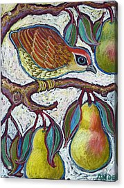 Partridge In A Pear Tree 3 Acrylic Print by Ande Hall
