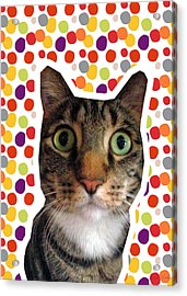 Party Animal - Smaller Cat With Confetti Acrylic Print by Linda Woods