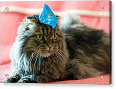 Party Cat Acrylic Print by Robert Culver