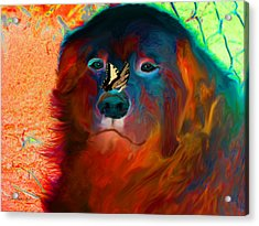 Party Pyrenees Acrylic Print