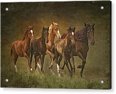 Acrylic Print featuring the photograph Paso Peruvians by Priscilla Burgers