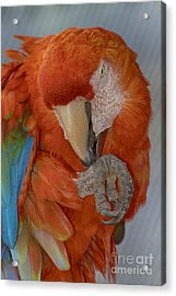 Pass The Hand Lotion Please Acrylic Print by Anne Rodkin