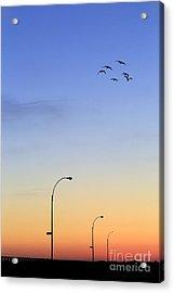 Passage Into Dawn Acrylic Print by Evelina Kremsdorf