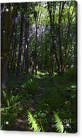 Passing Ferns  Acrylic Print by Tim Rice