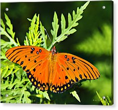 Passion Butterfly Acrylic Print by Walter Herrit