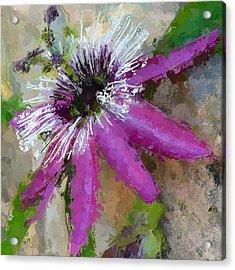 Passion Flower Acrylic Print by Amanda Lakey