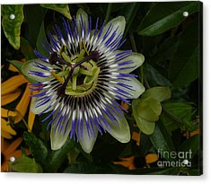 Acrylic Print featuring the photograph Passion Flower by Jane Ford
