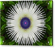 Passion Flower Portal Mandala Acrylic Print