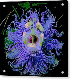 Passion Flower  Acrylic Print by Shirley Moravec