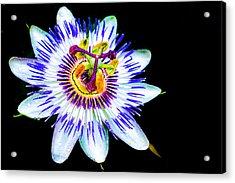 Passion Flower Vine Acrylic Print