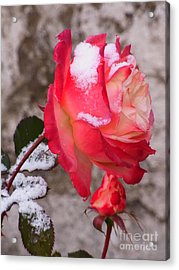 Acrylic Print featuring the photograph Passion Of Life by Agnieszka Ledwon