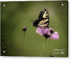 Passion Of The Nectar Acrylic Print by Cris Hayes