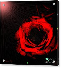 Passion. Red Rose Acrylic Print