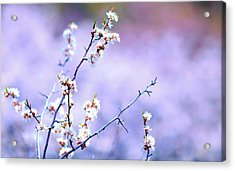 Passion On A Stick Acrylic Print