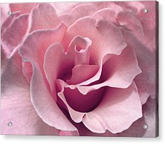 Passion Pink Rose Flower Acrylic Print by Jennie Marie Schell