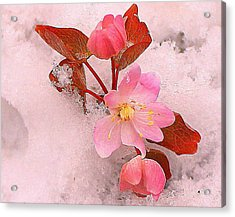 Acrylic Print featuring the photograph Passionate Pink by Candice Trimble