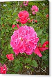 Passionate Pink Springtime Acrylic Print