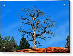 Past Prime Acrylic Print by Greg Norrell