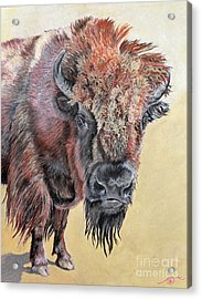 Pastel Buffalo Stare Acrylic Print by Ann Marie Chaffin