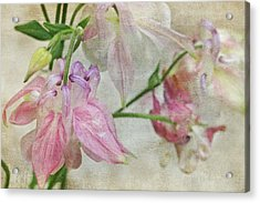 Acrylic Print featuring the photograph Pastel Columbines by Peggy Collins