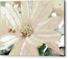 Pastel Daisy Photoart Acrylic Print by Debbie Portwood