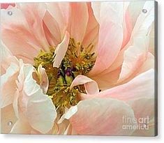 Pastel Floral Acrylic Print by Kaye Menner