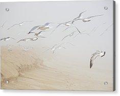Pastel Gulls In Fog Acrylic Print