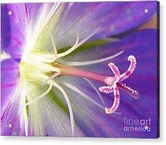 Pastel Passion  Acrylic Print by Judy Via-Wolff